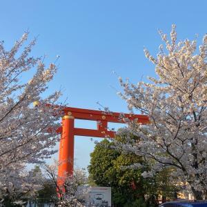 今年は複雑な気持ちで眺める桜の景色