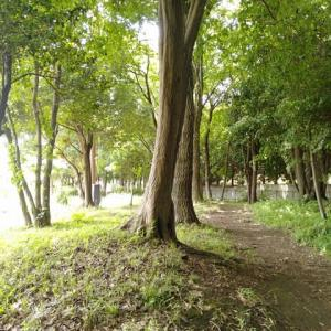 向陽台の林