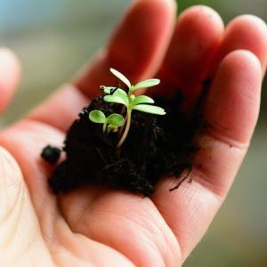 使命を実現する為に持っている可能性の種を育む準備、スタートしましょう