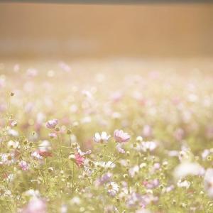 【天赦日&一粒万倍日】9/8(日)発芽したい人のレイキセミナー開催のご案内