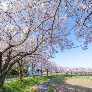ドローン空撮 見沼田んぼ 都心に近い里の春風景 見沼代用水西縁「大牧・見沼」