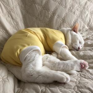過剰グルーミングの猫たち