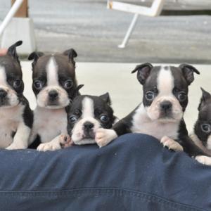 可愛い5兄妹です♪