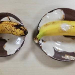 8時間でこんなにも差が?!パッチを貼ったトマトとバナナです!