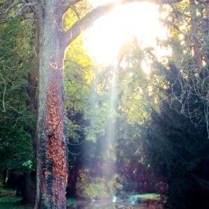 自然のエネルギーと光のシャワー