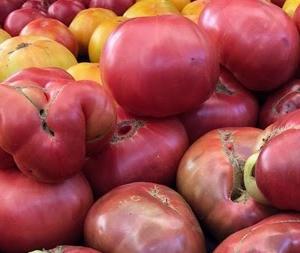 Everyday Tomatoes 毎日トマト