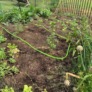 家庭菜園 2020年5月