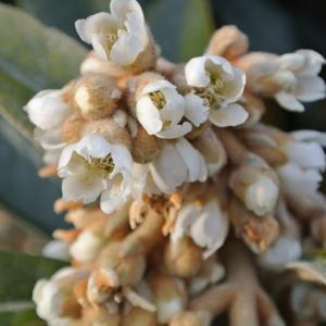 枇杷の花&冬枯れの美など
