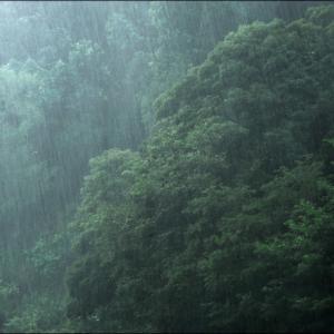 昨日は一日雨