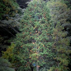 田舎のクリスマスツリー?
