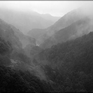 雨降って靄が立つ