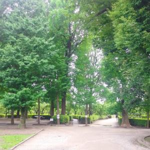 シェアハウスに行く前に羽根木公園で