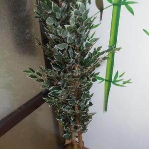 シェアハウスに観葉植物が届く