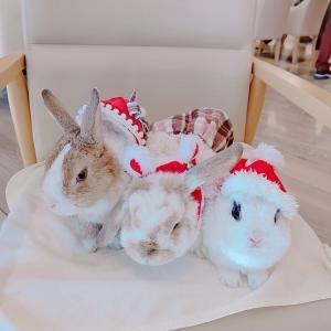 クリスマスうきうきうさんぽ会【ランチ】