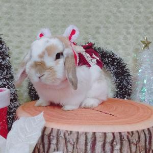 クリスマスうきうきうさんぽ会