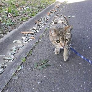 過去画像!公園のお散歩には猫の好きなコースが色々!