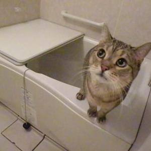 お湯張りはちょっと楽しいですよね!
