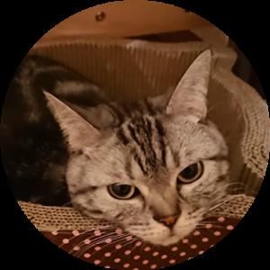 2月22日は猫の日ということで、我が家のしまりん