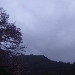 桜舞い散る青野原オートキャンプ場で久しぶりのソロキャンプ。つづき