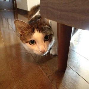 【猫日記2012.9.23】過去の思い出