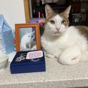 【猫日記】健太郎とみぃの助