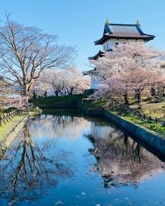 国内最北・松前藩の桜