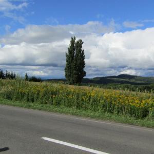 美瑛への旅 北海道