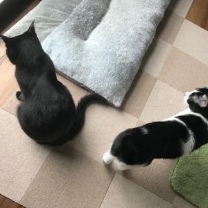 小太郎君と猫たち