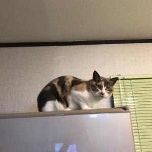 猫たち、小太郎君