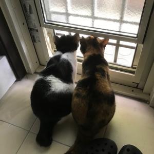 コタ君、猫たち
