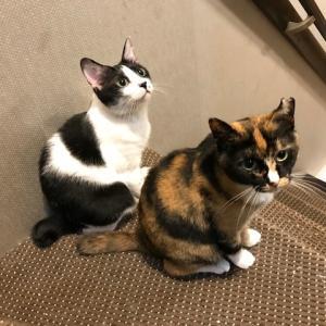 コタ君猫たち