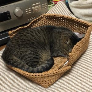 ■クラフトバンドで猫ベット 長持ち~