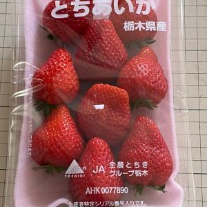 食べてみた 栃木の新しい苺「とちあいか」