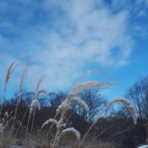 寒い日だからこそ(*^-^*)