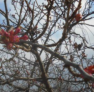 恒例 春の●ンまつり…