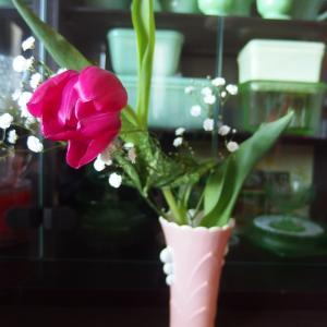 マゴ君からお花