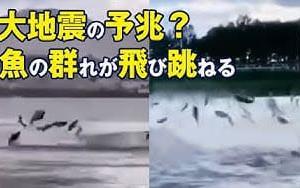 大地震の予兆? 中国の各地で同時に魚の群れが飛び跳ねる光景が目撃  6月15日朝 大紀元 エポックタイムズ・ジャパン