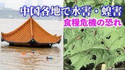中国で大量のイナゴが発生 食糧危機の恐れ【禁聞】    NTDTVJP