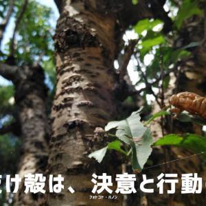 フォトコト『蝉の抜け殻は、決意と行動の足跡』