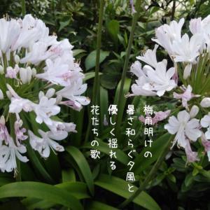 フォトコト『梅雨明けの暑さ和らぐ夕風と優しく揺れる花たちの歌』