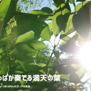 詩『太陽と葉っぱが奏でる満天の葉』