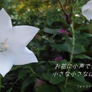 フォトコト『お花に小声で告げた思いは 小さな小さなはじめの一歩』
