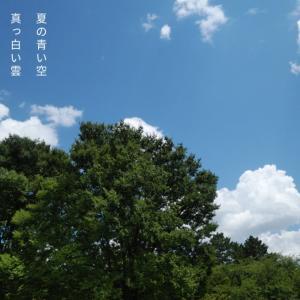 フォトコト『夏の青い空真っ白い雲静かな葉の音大地に足をつけて踏みだす一歩』