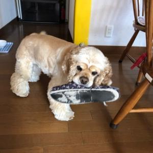 「交換」という日本語をマスターした犬