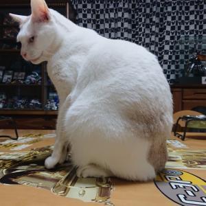 還暦の猫さんは毎日努力してますよ~の巻