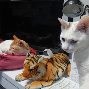 猫さんの行動は先が読めませんよ~の巻