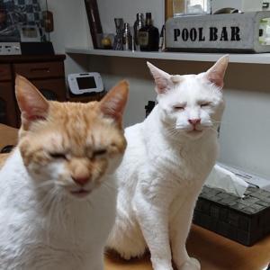 猫猫会議中のしょっぱい顔の二人ですよ~の巻