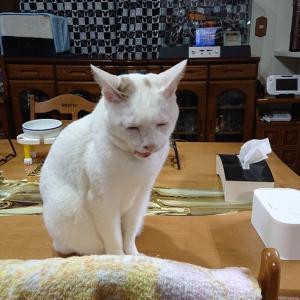 らんこ、記者会見をやってみたかったんです!偶然、マユタさんの命日が重なりましたよ~の巻