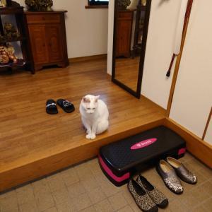 らんこ、いろいろ考える猫さんなんですよ〜の巻