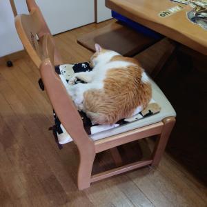 『寝る』という演技は簡単そうで難しいんだよ~の巻